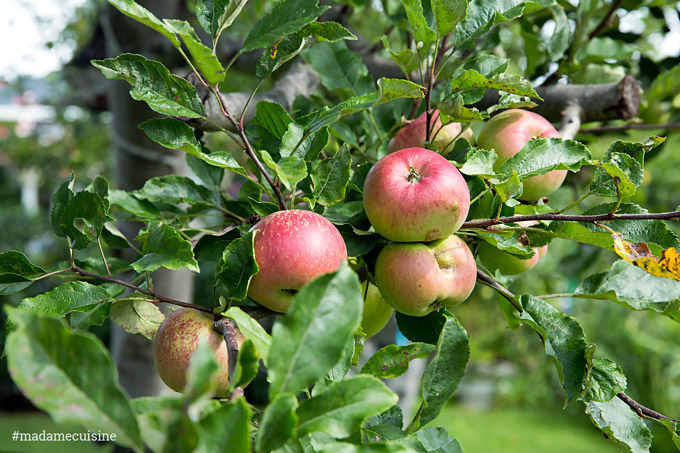 Apfelbrot mit Apfel-Calvados-Konfitüre   Madame Cuisine Rezept